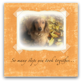 dog-sympathy-card