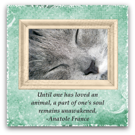 Printable Cat Sympathy Card