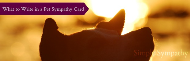 pet sympathy card messages