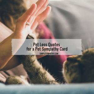 pet-loss-quotes