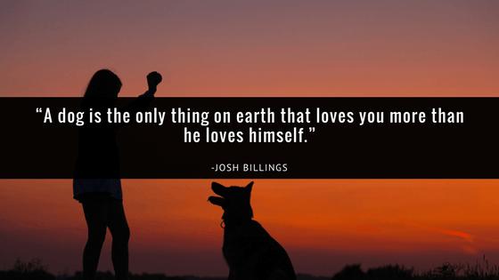 pet-loss-quotes-dog-loss