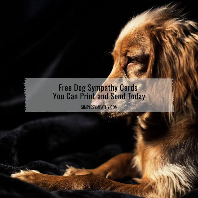 It is an image of Free Printable Sympathy Card for Loss of Pet inside giant condolence card